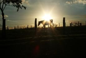 cavalo-fim-de-tarde-hotel-fazenda-brotas-jacauna