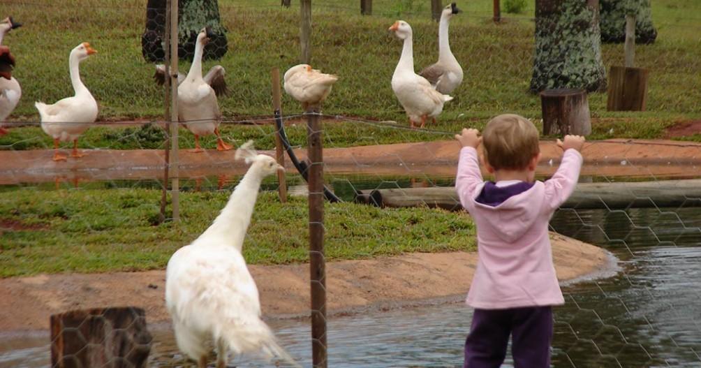 Crianças no Hotel Fazenda