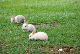 hotel-fazenda-brotas-coelhos